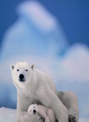 "The image ""http://stevenbell.blogspot.com/images/polar-bear-cubs.jpg"" cannot be displayed, because it contains errors."